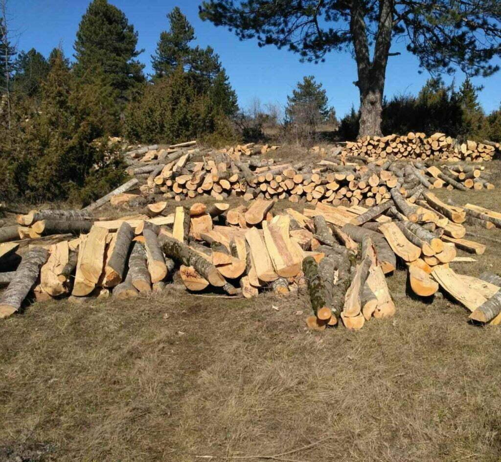 Συνελήφθη 25χρονος σε δασική περιοχή της Καστοριάς για παράβαση της δασικής νομοθεσίας
